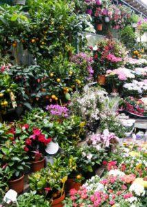 Marché de Fleurs auf der Ile de la Cite